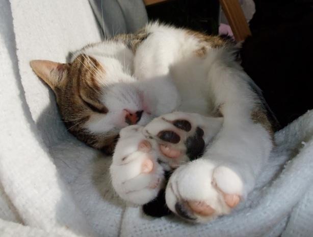 Cat Toes!