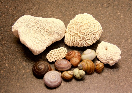 snail shells & coral